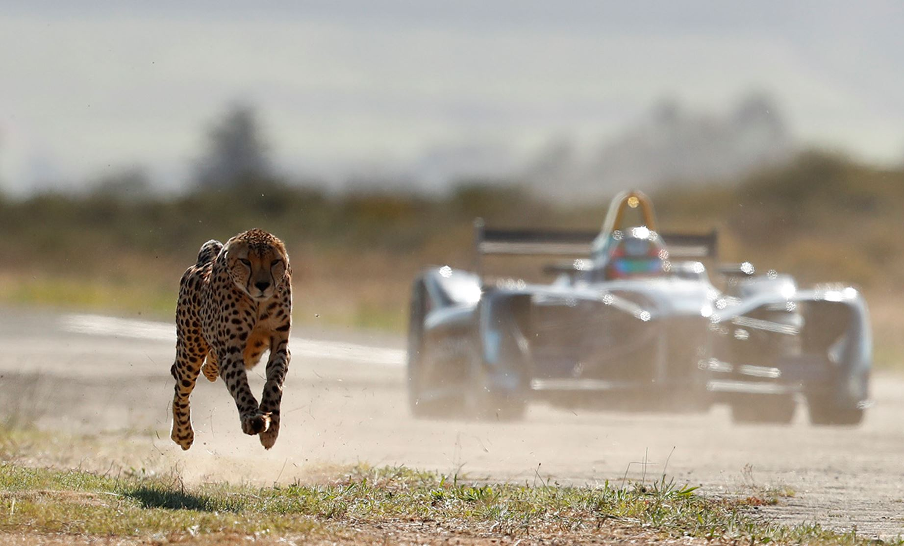 cheetah_leading_car_at_start